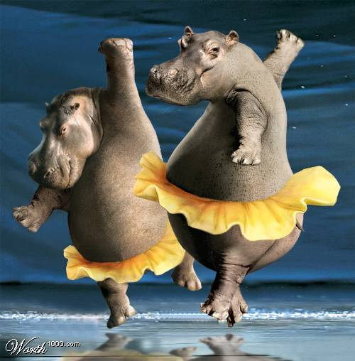 Dancing Animals  Pics