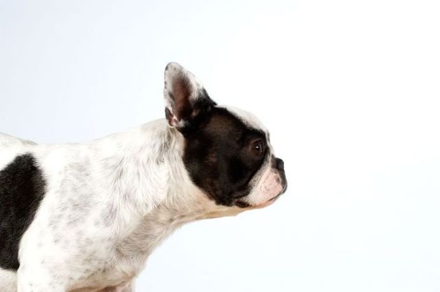 Dogs portraits (65 pics)