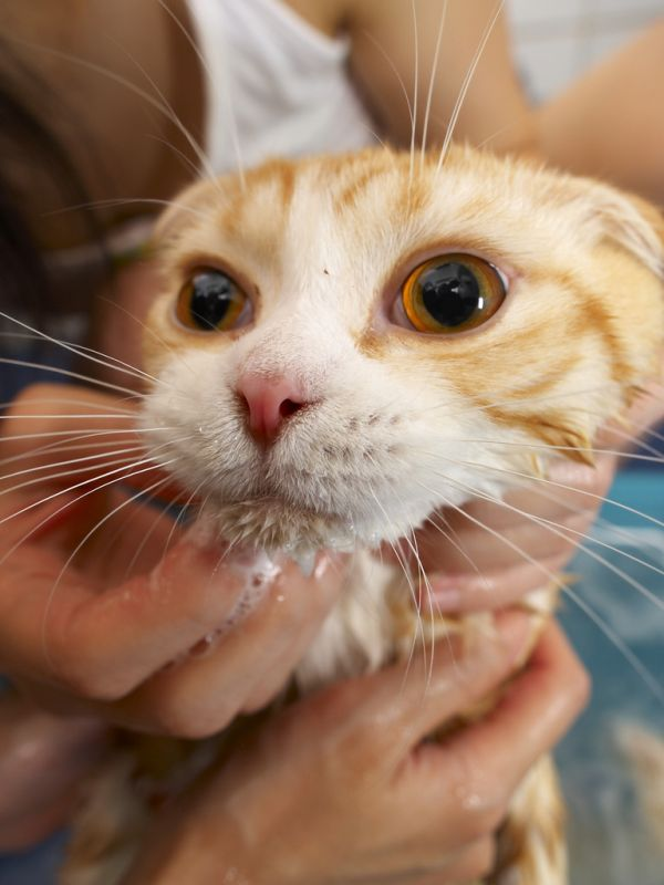 A bath for the cat (22 pics)