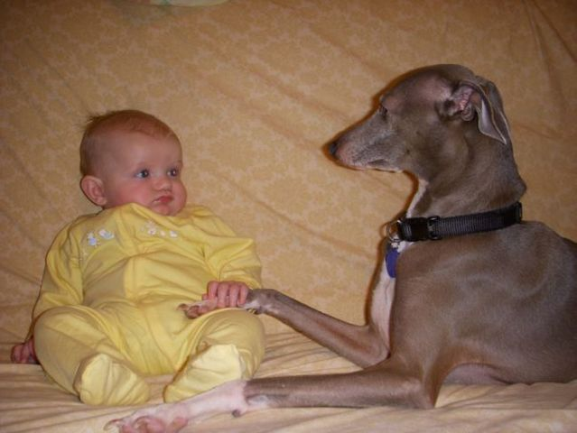 Positive emotions of the day! Children and dogs (36 pics)