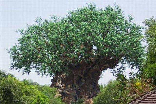 The tree of life (16 photos)