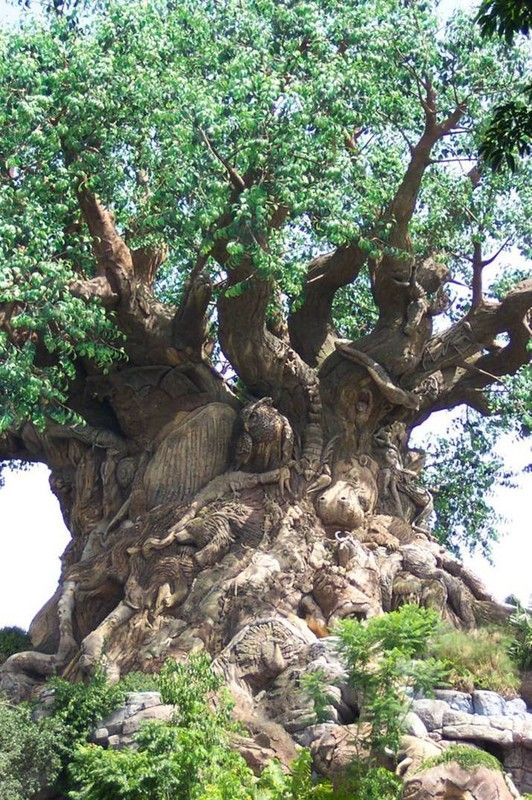 The tree of life (16 photos)
