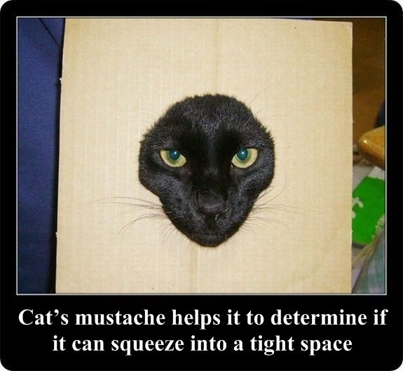 Interesting facts about cats in pictures (30 pics)
