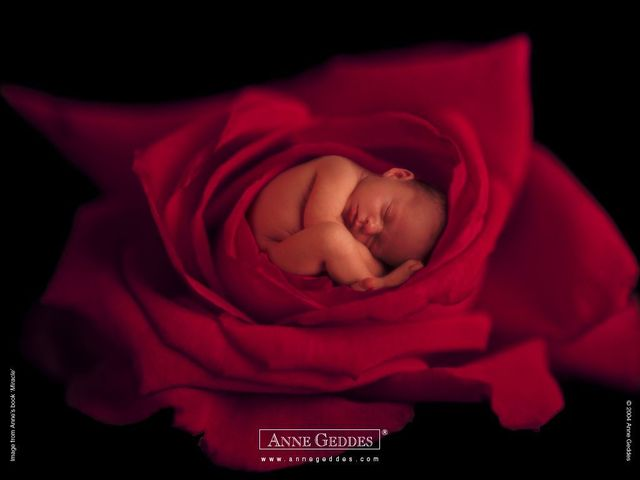 Anne Geddes and her baby pictures (111 pics)