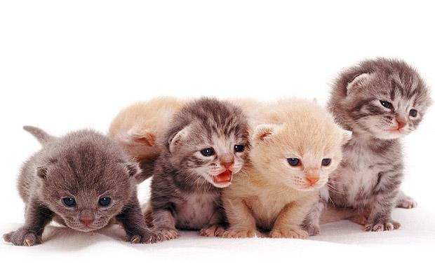 Positive emotion of the day. Photoshot with kittens (12 pics)