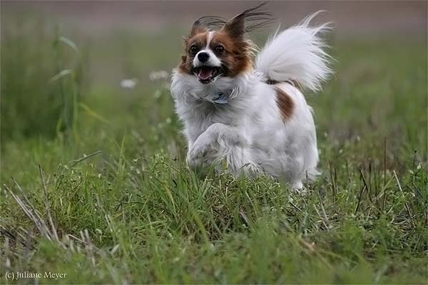 I'm coming master! (77 pics)