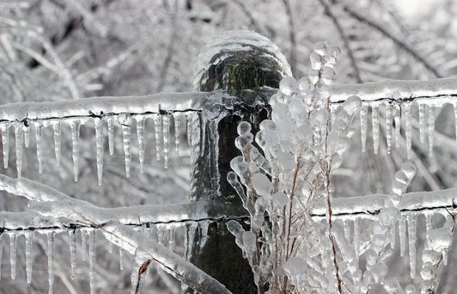 Ice storm in Arkansas (53 pics)