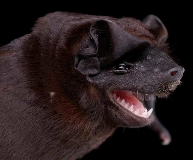 Bats' faces (54 pics)