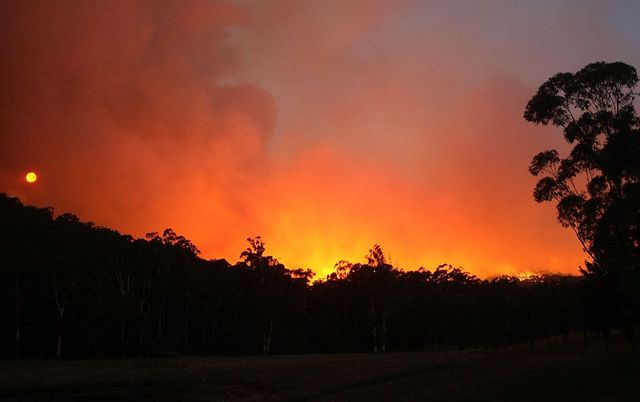 Horrible bushfires in Australia (36 pics)