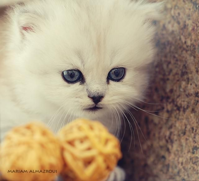 These cute little kittens (24 pics)
