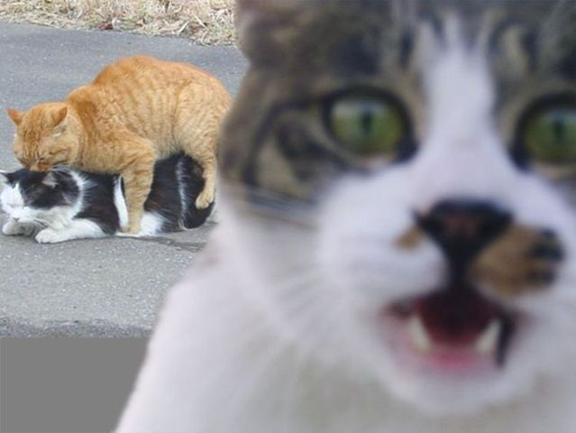 Funny picdump (133 pics)