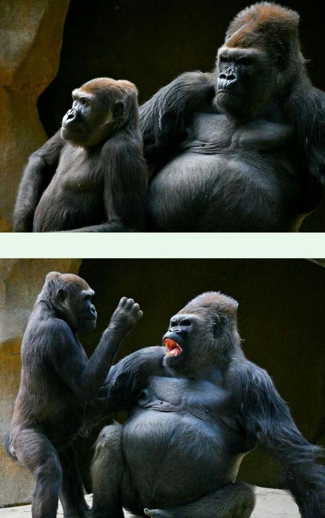 Funny picdump (106 pics)
