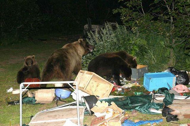 Bear party (3 pics)