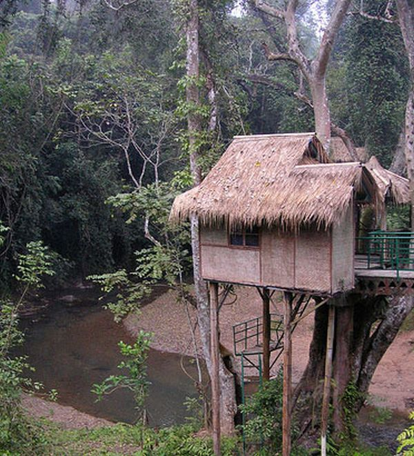 Tree houses (31 pics)