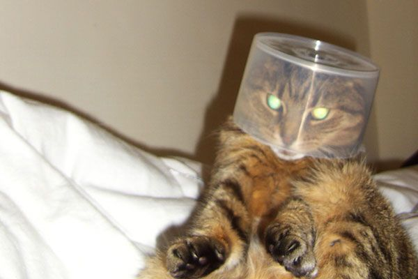 Wake up your cat (32 pics)
