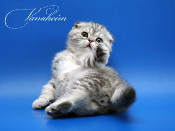 Cute kittens (22 pics)