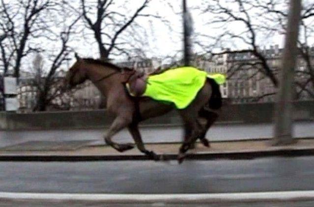 Horse runs through Paris (3 pics + 1 video)