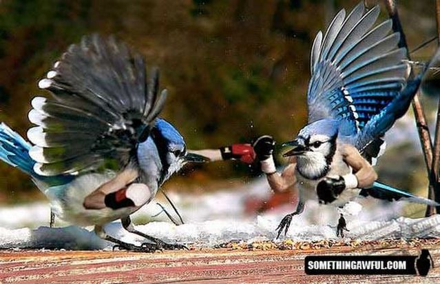 Funny montage - Birds with Human Hands (46 pics)