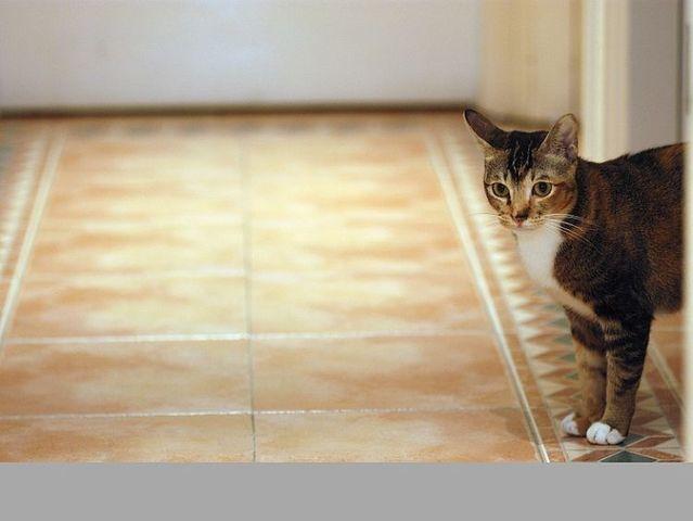 Cute cats (53 photos)