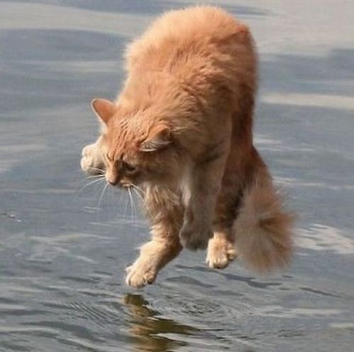 Walking on water (8 pics)