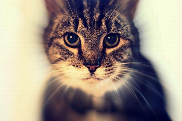 Hypnocats (26 pics)