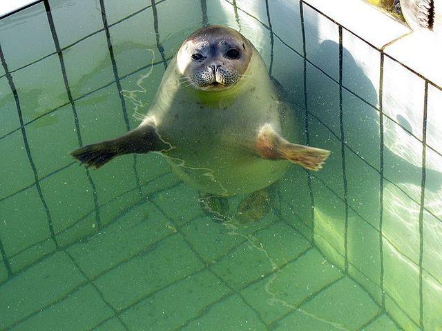 Dancing seal (5 pics)