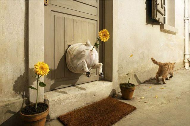 Great creative work … Photographer Vincent Dixon (62 pics)