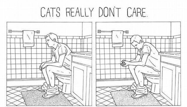 Cats really don't care (5 pics)