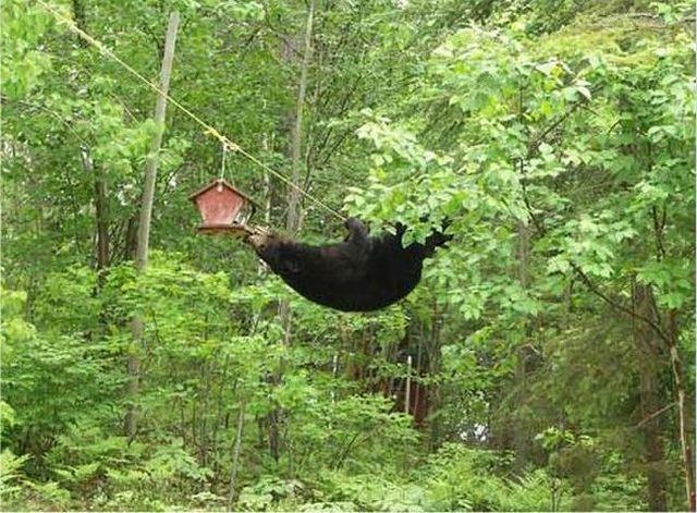 Little adventure of a bear (4 pics)