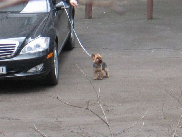 How do lazy people walk their dogs? (3 pics)