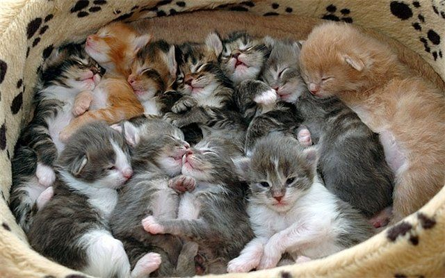 Funny cats (38 pics)