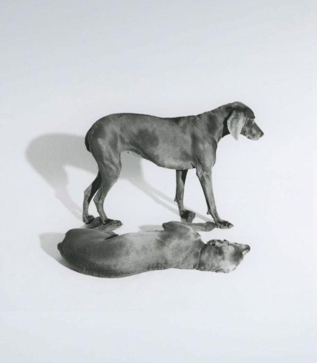 William Wegman and his dogs (42 pics)