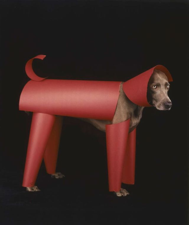 William Wegman and his dogs (42 pics)