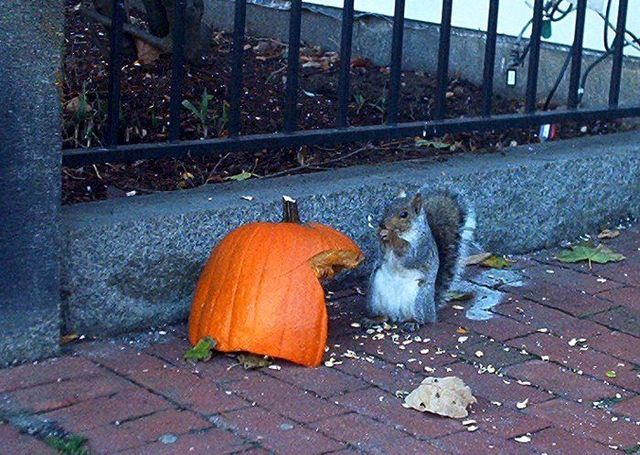 Drunk squirrel (3 pics + 2 videos)