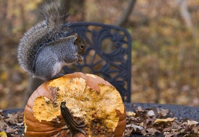 Drunk squirrel (3 pics + 2 videos)