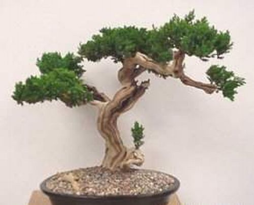 Home trees (30 pics)