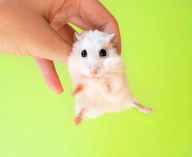 Small furry wonder (33 pics)