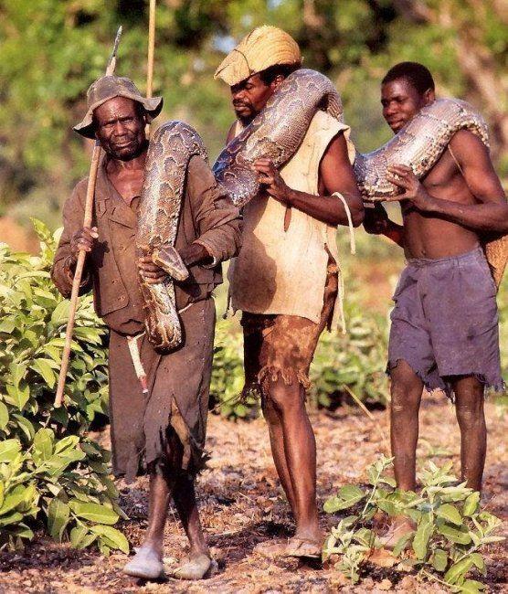 Anaconda hunt (9 pics)