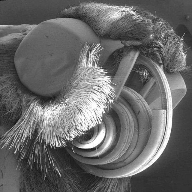 The horror under the microscope (12 photos)