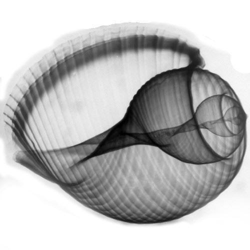 Life through X-ray beams (59 picture)