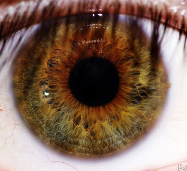 Amazing eye macros (23 pics)