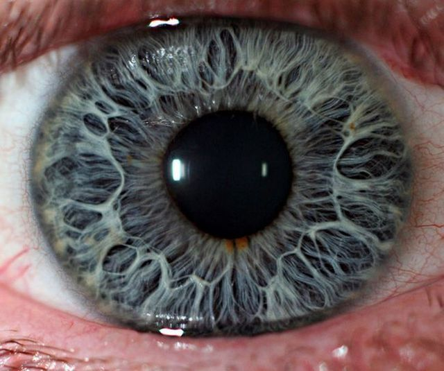 Amazing eye macros (23 pics)