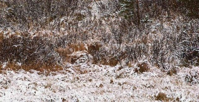 Natural camouflage (20 pics)