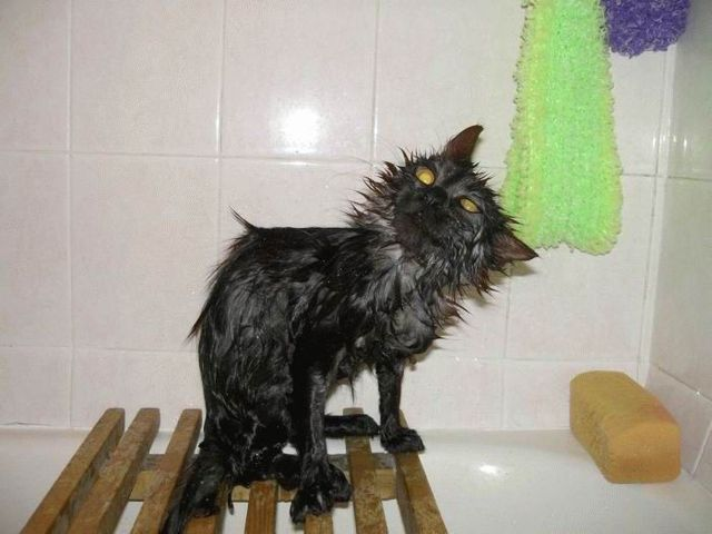 Bath time for cats (34 pics)