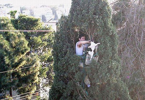 Rescue (6 pics)