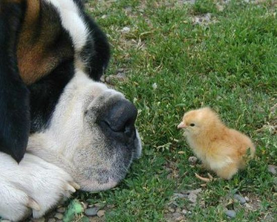 These funny animals (39 pics)