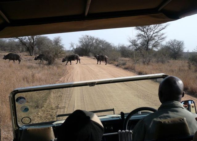 Kruger National Park (52 pics)