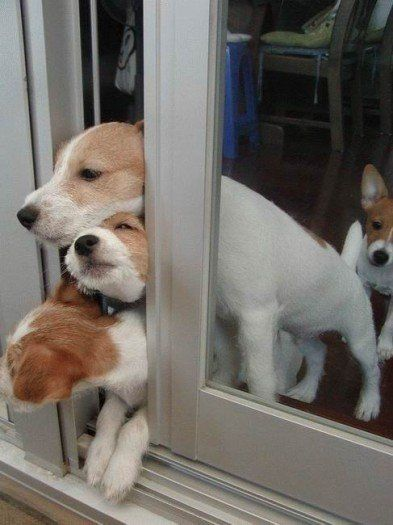 These funny animals (35 pics)
