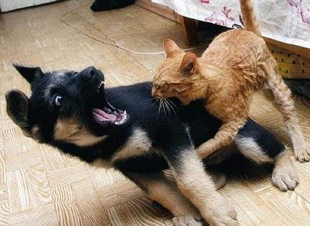 These funny animals (59 pics)