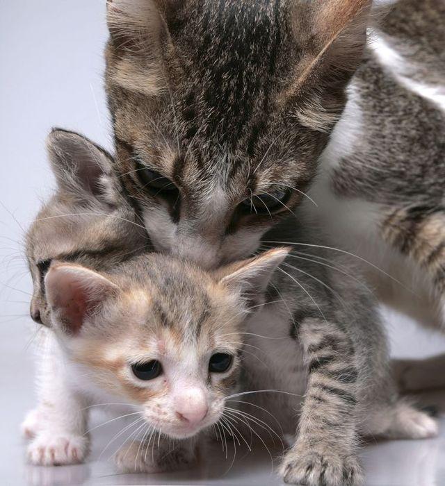 Cats – always cute (45 pics)